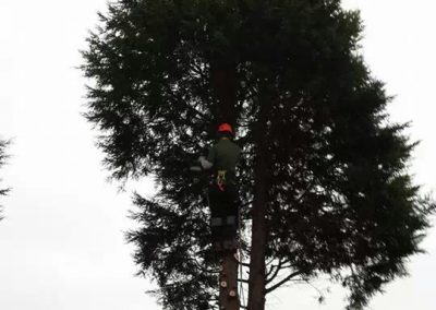 ARB Tree Services Gallery12
