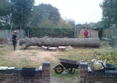 ARB Tree Services Gallery18