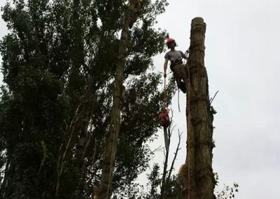ARB Tree Services Gallery19